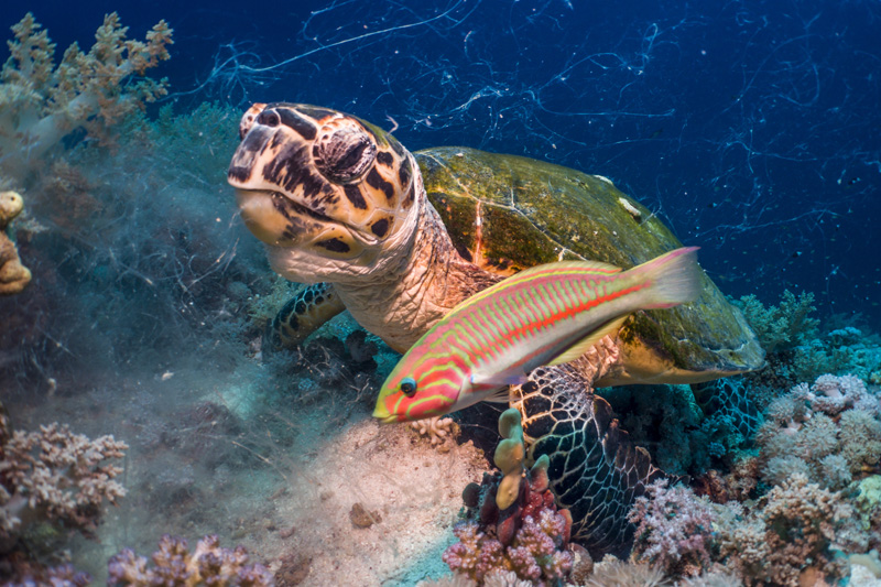 turtles and fish on the ocean floor sealife cameras